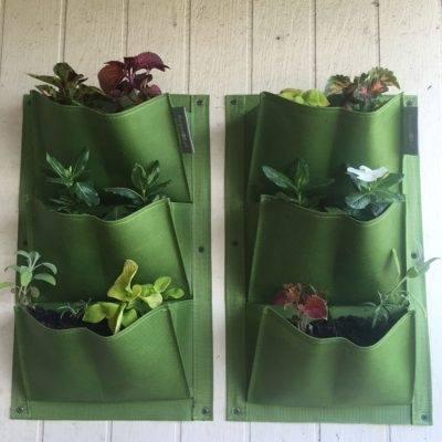 Vertical gardening using Canvas shoe organizer